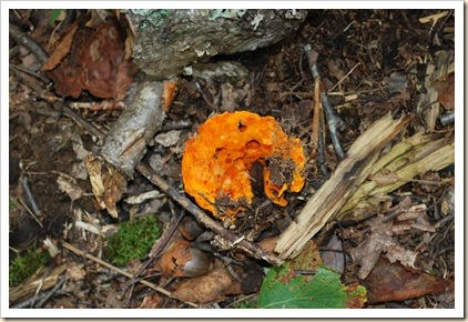 fungus 7