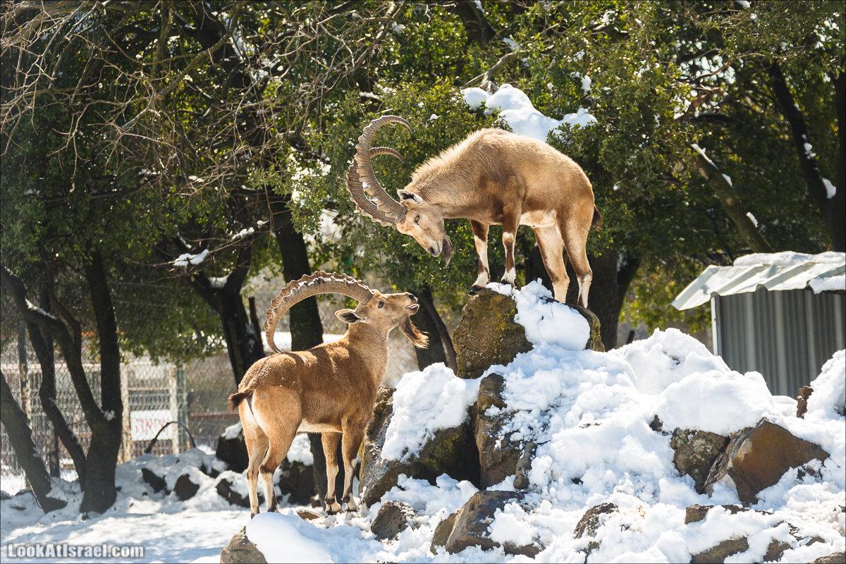 LookAtIsrael.com | Снег в Израиле, Голанские высоты и Галилея | Snow in Israel, Golan Heights and Galilee | שלג בישראל, רמת הגולן וגליל