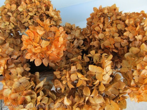 orange dyed hydrangeas (4)