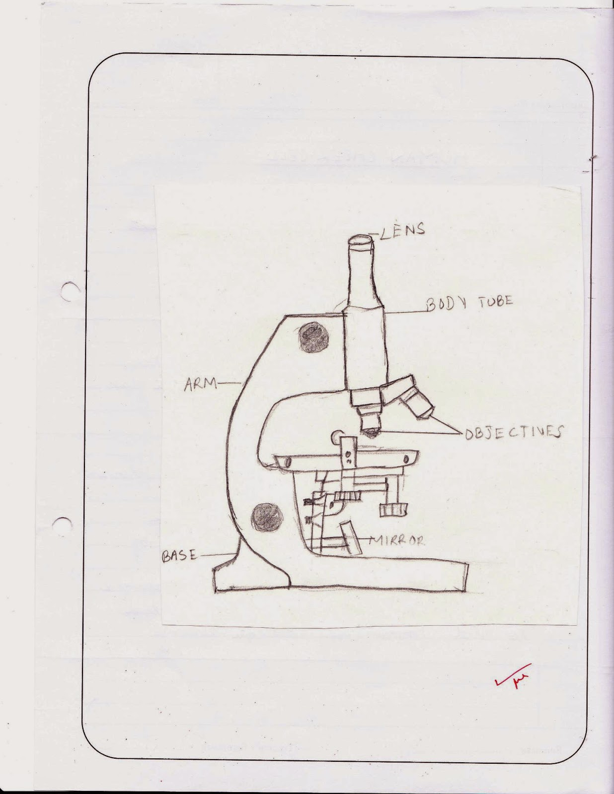 MY HOMEWORK: Biology Practicals Class 9 : Microscope and