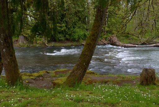 Crabtree Creek at Larwood Bridge