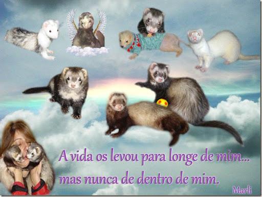 a_vida_msd