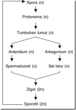 Skema Metagenesis Tumbuhan Lumut : skema, metagenesis, tumbuhan, lumut, Biology, Update:, Metagenesis, Lumut