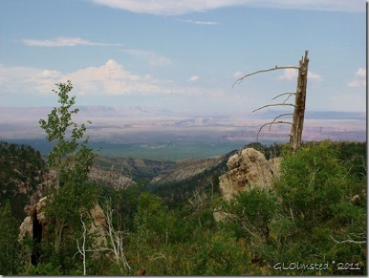 Marble Plateau from Saddle Mt trail Kaibab National Forest Arizona