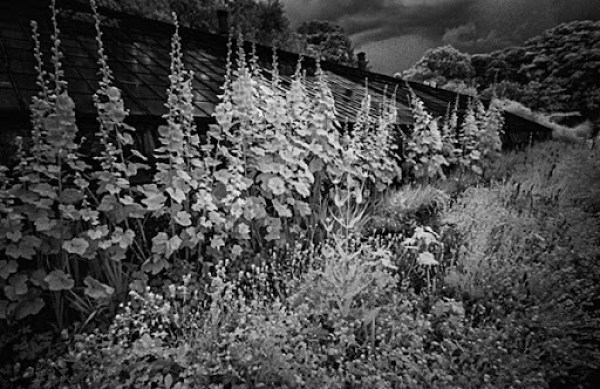 Old Greenhouse and Border IR