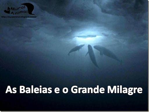 milagre-baleias (1)