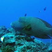 Siladen Fish.jpg
