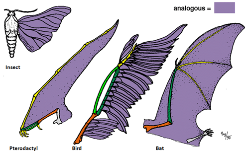 Example of Analogous organs - Science - Heredity and Evolution - 8775569 | Meritnation.com