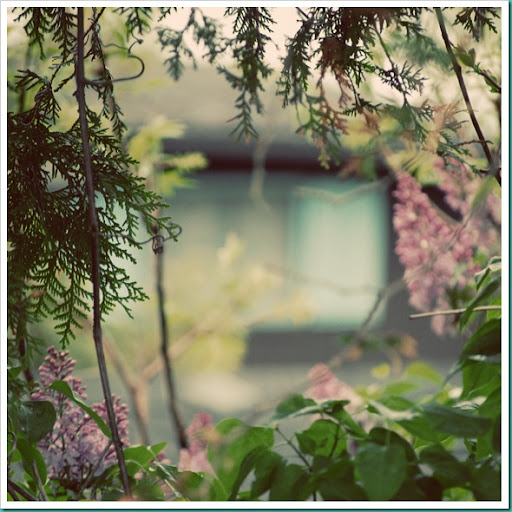 Cottage Window Through Lilac Tree