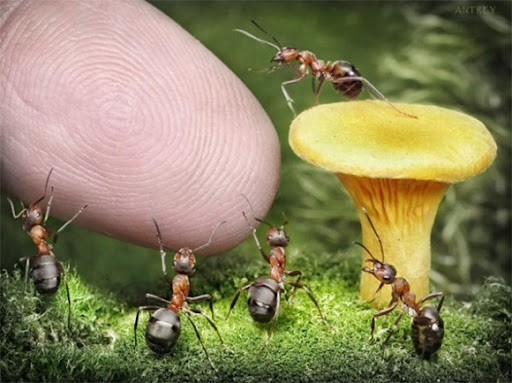 Life-of-Ants-Andrey-Pavlov-15
