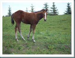 JUDY'S ANGELS AND ANCESTORS BLOG: Spirit Animal - Horse