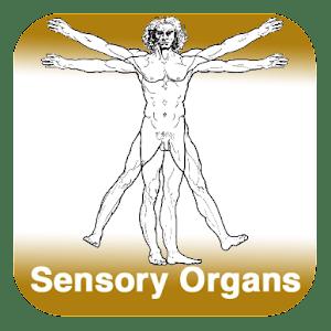 Anatomy - Sensory Organs