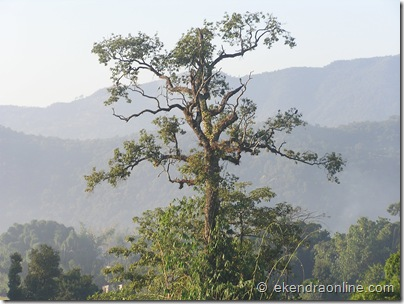 an age old bare tree : Leisure pics in Pokhara