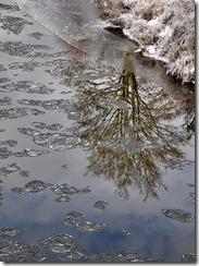 Frozen Severn 4