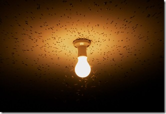 flies_attracted_to_light