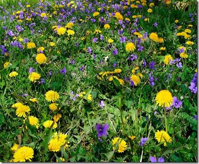 spring-flowers-grass