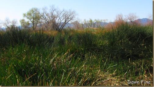 sweetwater wetlands_007