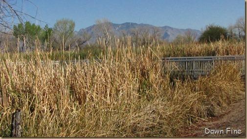 sweetwater wetlands_113