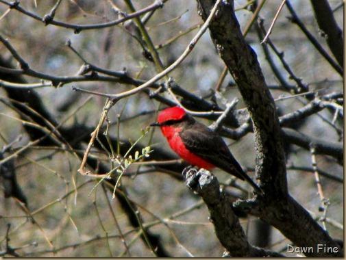 bird walk catalina state park_072