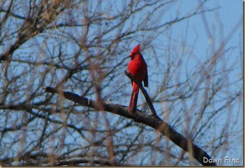 bird walk catalina state park_034