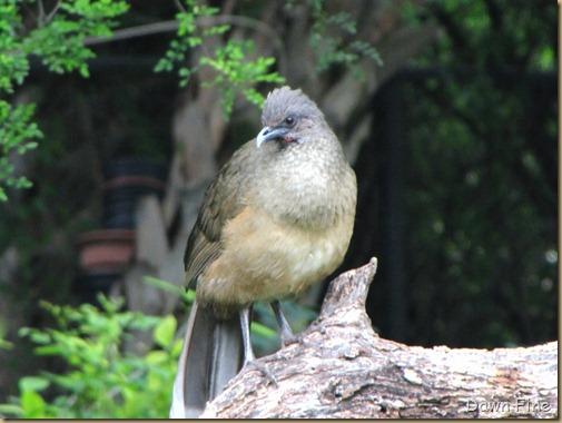 Birding valley nature center_029