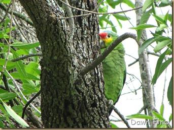 Birding valley nature center_008
