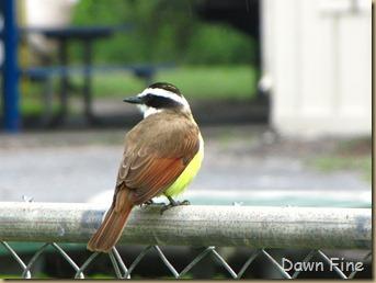 Birding valley nature center_003