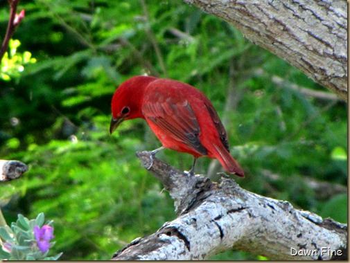 big sit birds_031