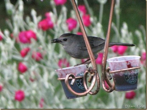 birds at feeder_20090624_041