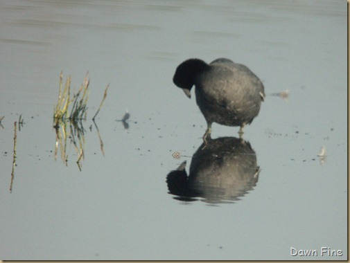 digiscoping class with clay (6)