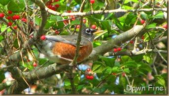 Birds around Dells_012