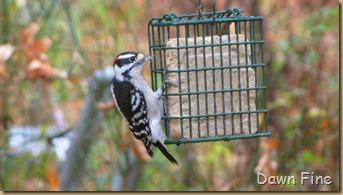 Birds around Dells_006