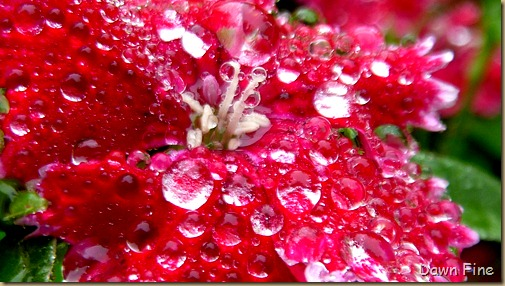 Water droplets and flowers_053