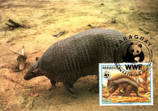 Pocztówka z pancernikiem olbrzymim