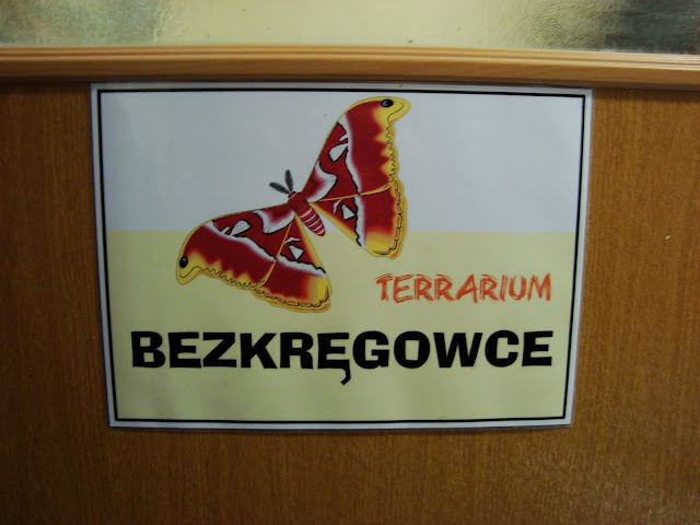 Terrarium - bezkręgowce