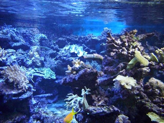 Rafa koralowa - Akwarium we wrocławskim zoo