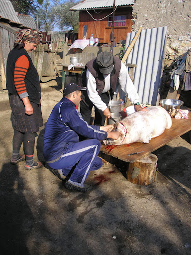 If you want to wake someone up you could do worse than killing a pig near them. I walked over to see what all the squealing was about and found that the trotters were already off and they were getting to work on the head.