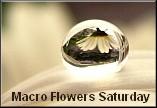Macro Flowers Saturday badge 3