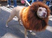 bizarre dog hairdos bored