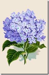 hydrangea-graphicsfairy008purpsm