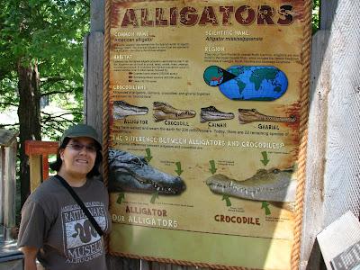 Alligator Exhibit