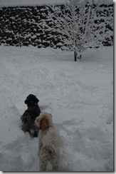 Snow 175