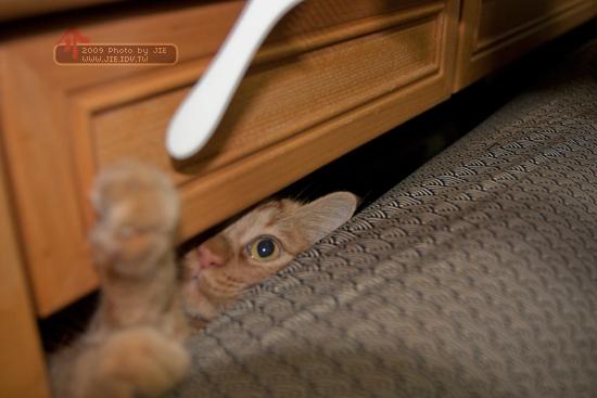 橘子貓在哪裡