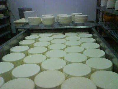 גבינת צפתית