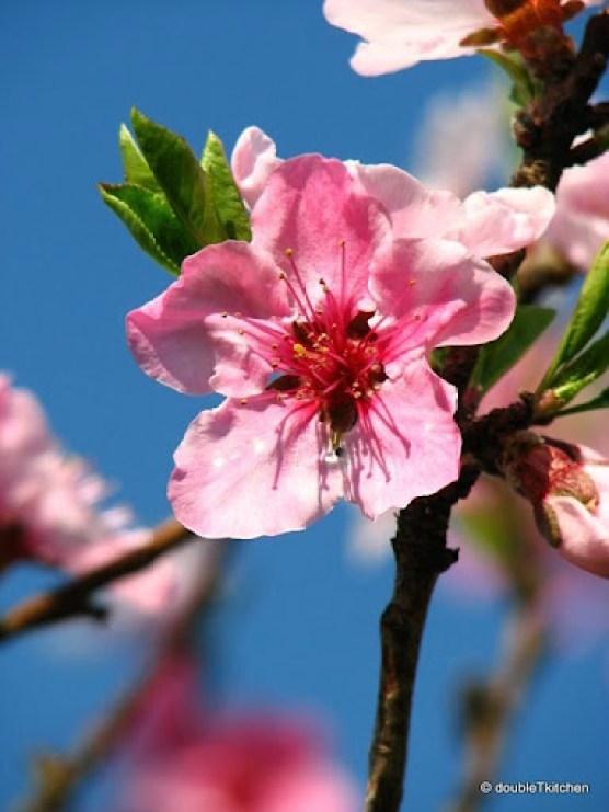 proljece-2