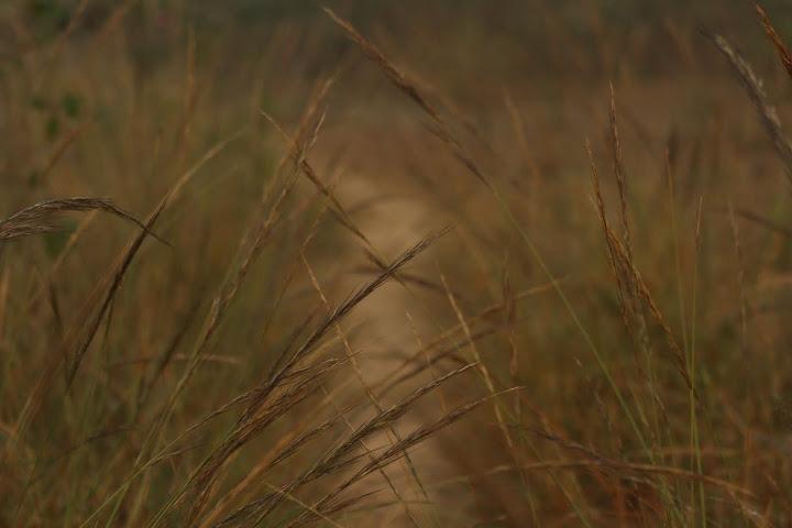 Grassland by Vaihav