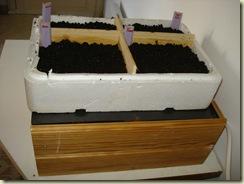 seed box 6_1_1