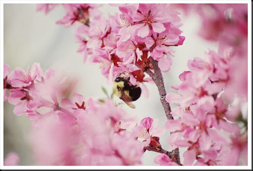 bumblebee blossoms