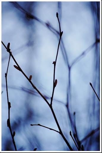Branch silhouette 2