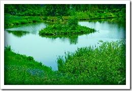 DSC_0008-pond